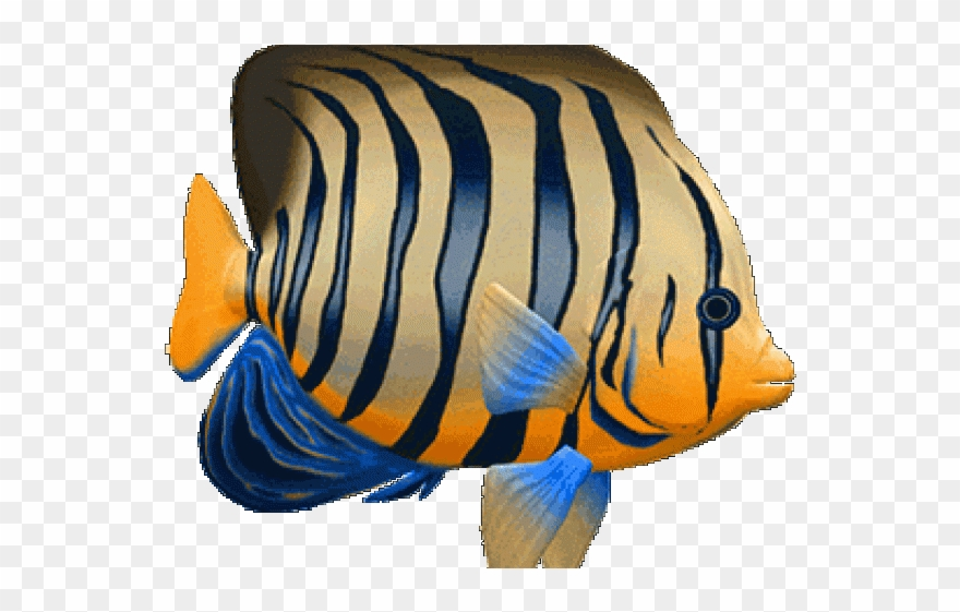 Tropical Fish Clipart 3d Fish.