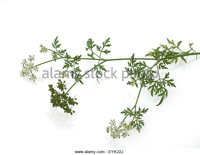 Homeopathy Dog Stock Photos & Homeopathy Dog Stock Images.