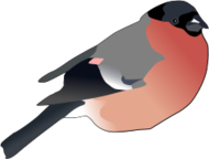 Eurasian Coot Clip Art Download 4 clip arts (Page 1).