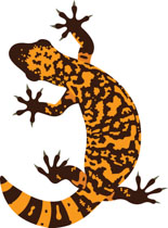 Reptiles Gila Monster Clipart.
