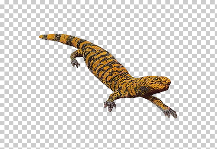 Gila monster Lizard Reptile, Crocodile markings PNG clipart.
