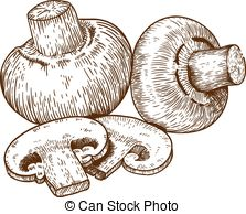 Vector Clipart of Agaricus campestris or meadow mushroom engraving.