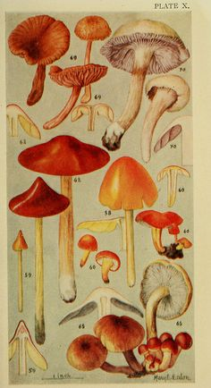 Edible Mushroom Catalog Created for Edible East Bay Magazine.