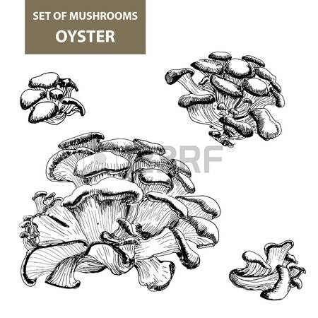 50 Gilled Stock Vector Illustration And Royalty Free Gilled Clipart.