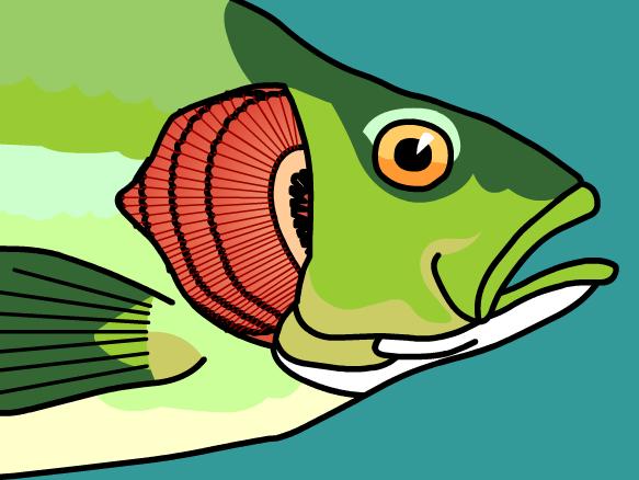 Fish gills clipart.