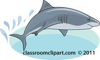 Shark Clipart : shark.