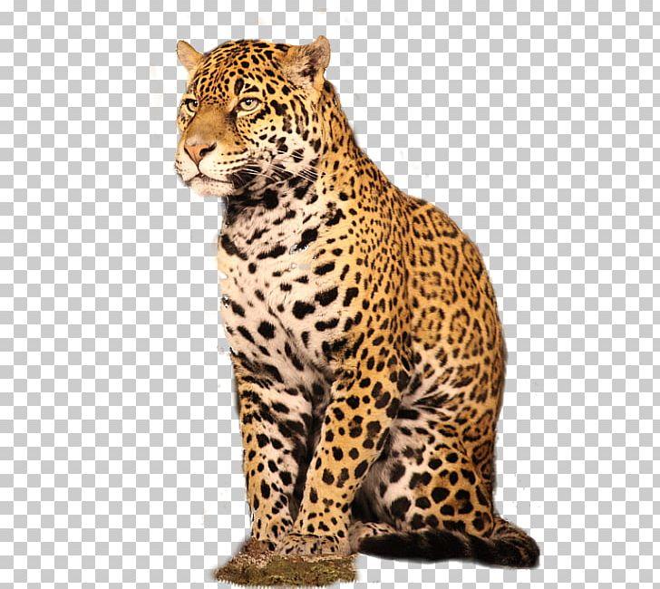 Leopard GIMP Adobe Photoshop Plug.