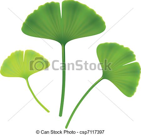 Ginkgo Illustrations and Clipart. 369 Ginkgo royalty free.