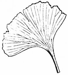 Gingko Clipart Clipground