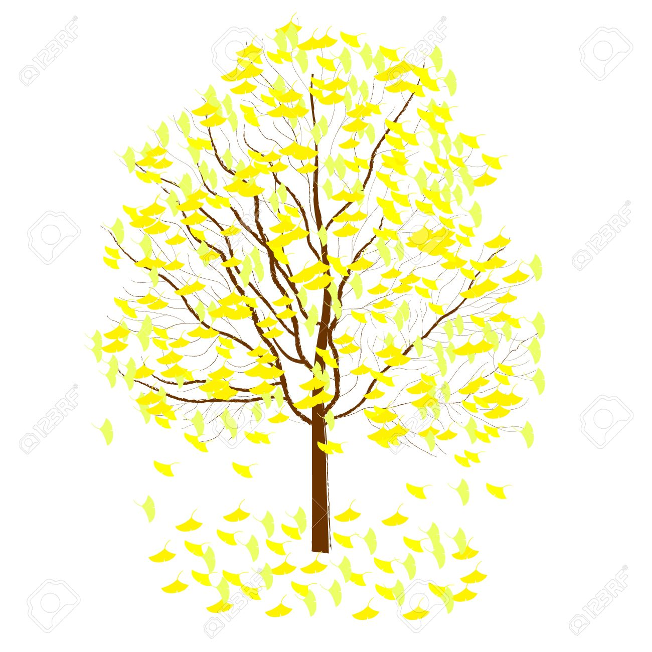 Ginkgo Tree Royalty Free Cliparts, Vectors, And Stock Illustration.