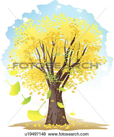 Ginkgo tree Clip Art Illustrations. 176 ginkgo tree clipart EPS.