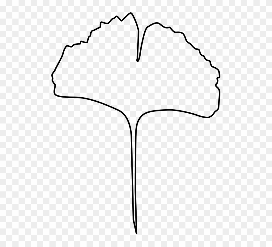 Gingko Leaf, Evolution, Gingko, Leaf, Plant, Tree.