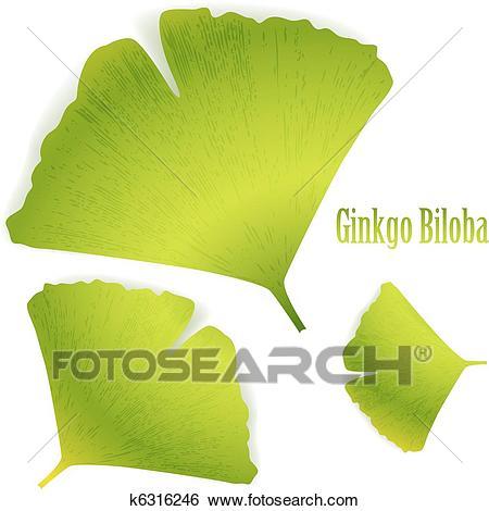 Ginkgo Biloba Clip Art.