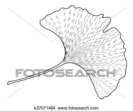 Ginkgo leaf Clipart.