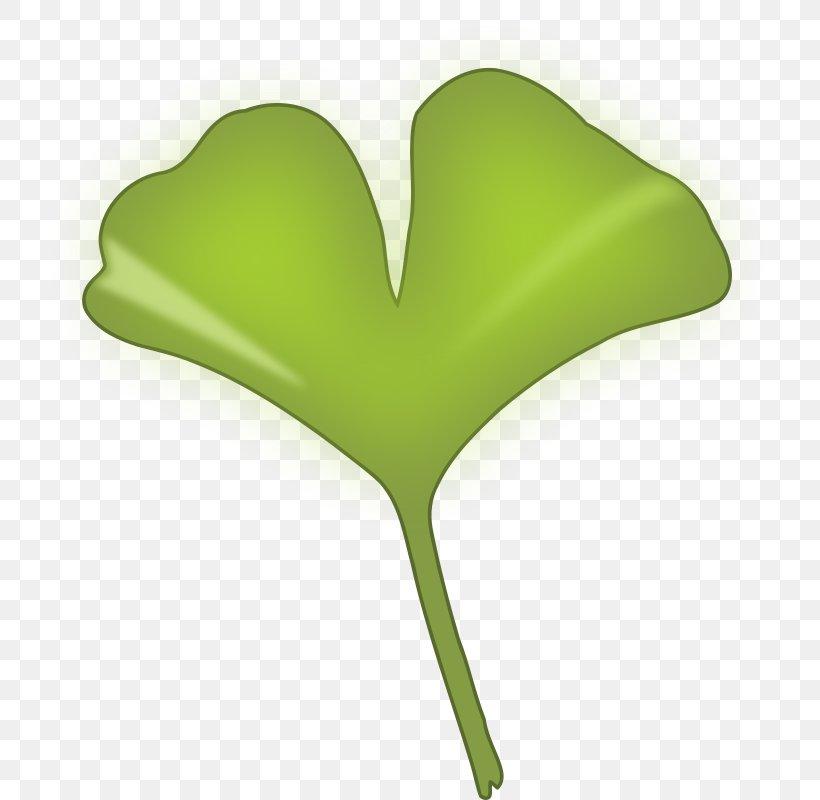 Ginkgo Biloba Ginkgoaceae Leaf Clip Art, PNG, 780x800px.