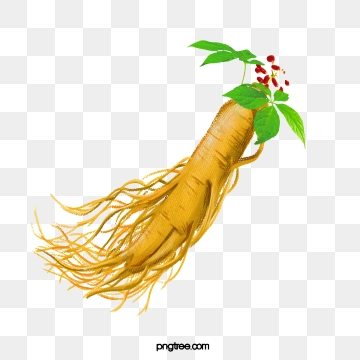 Ginseng Png, Vector, PSD, and Clipart With Transparent Background.