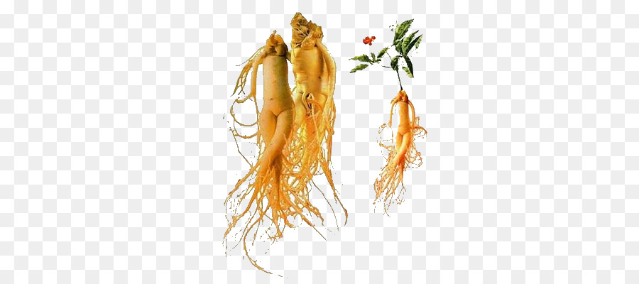 Carrot Cartoon png download.