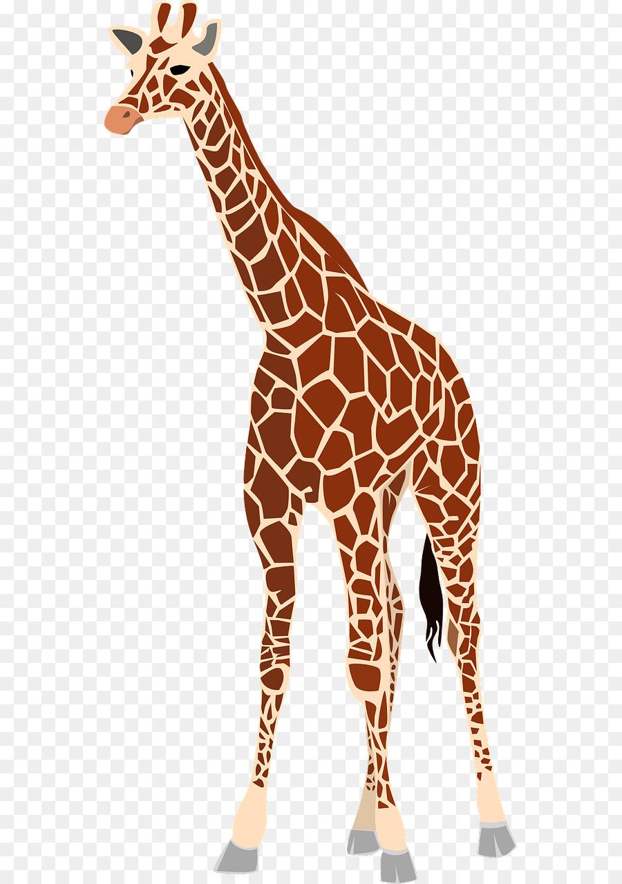 Girafa, Bebê Girafa, Bebê Girafas.