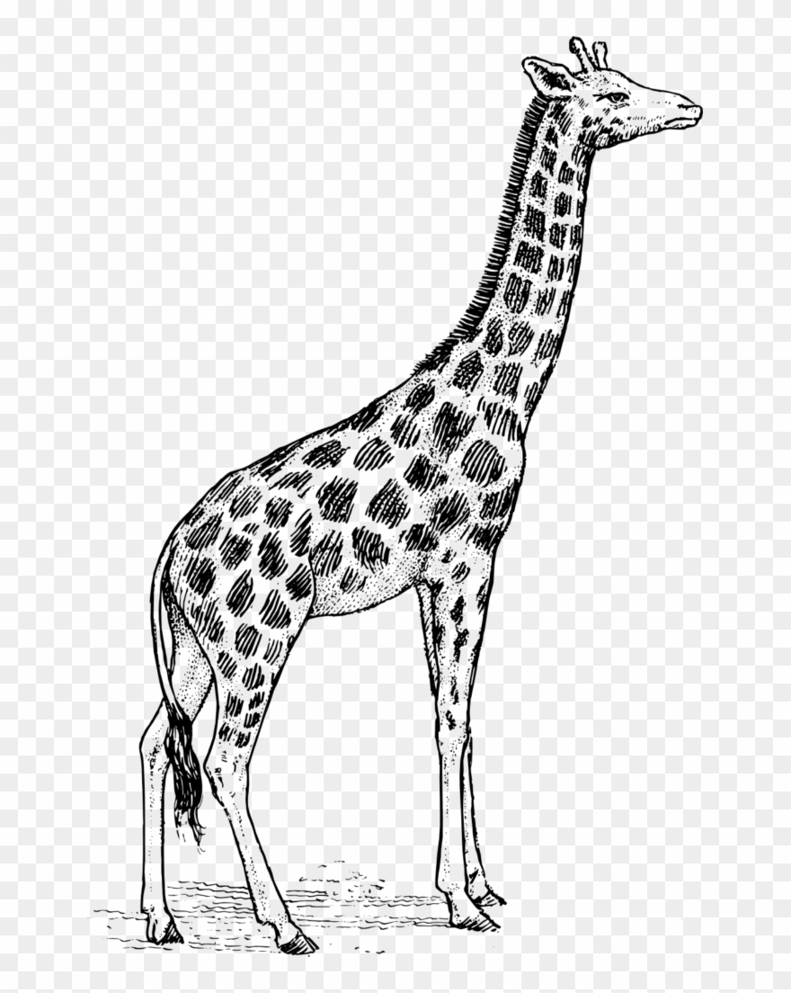 Giraffe Clipart Black And White.
