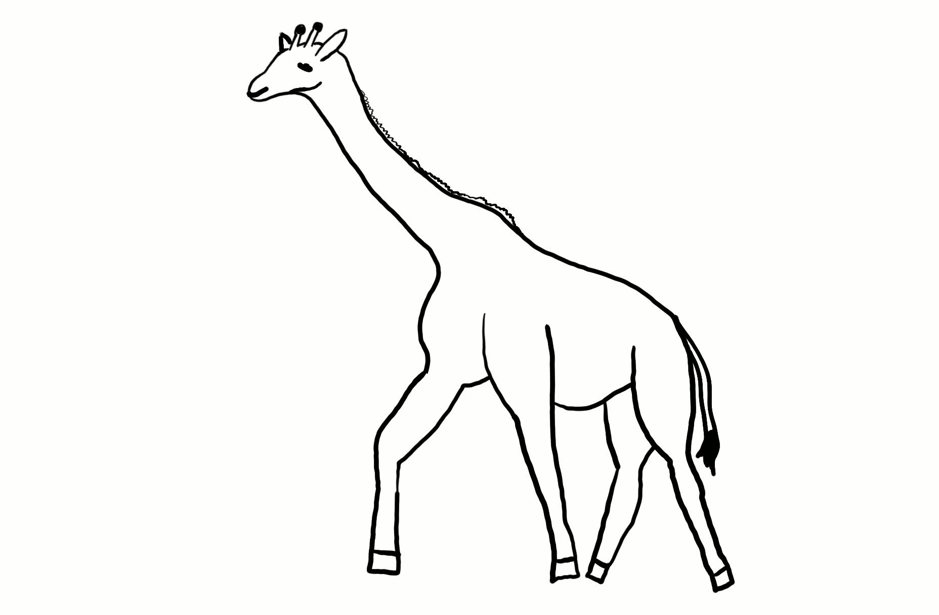 Giraffe Outline.