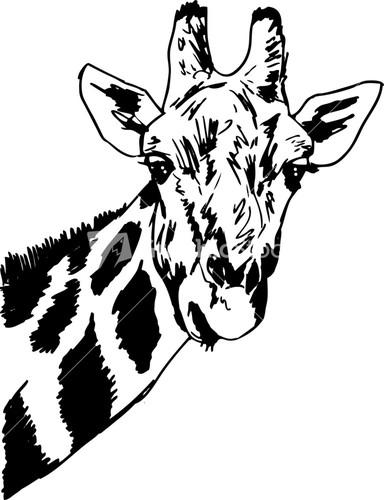Giraffe From The Bottom Clipart