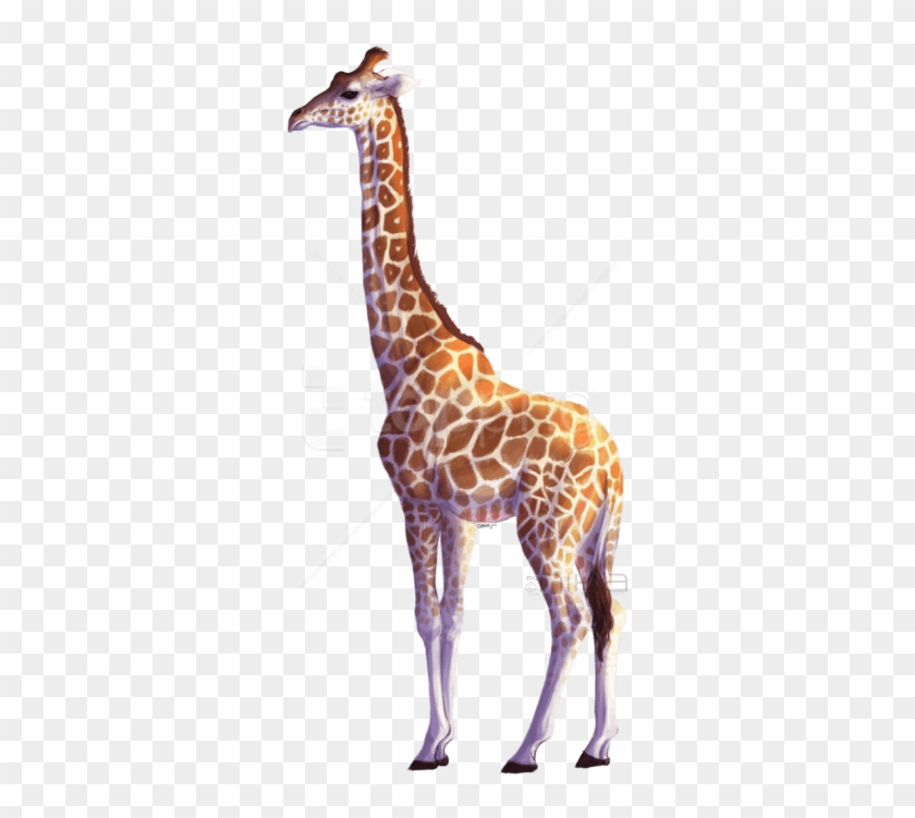 Download Giraffe Png Images Background.