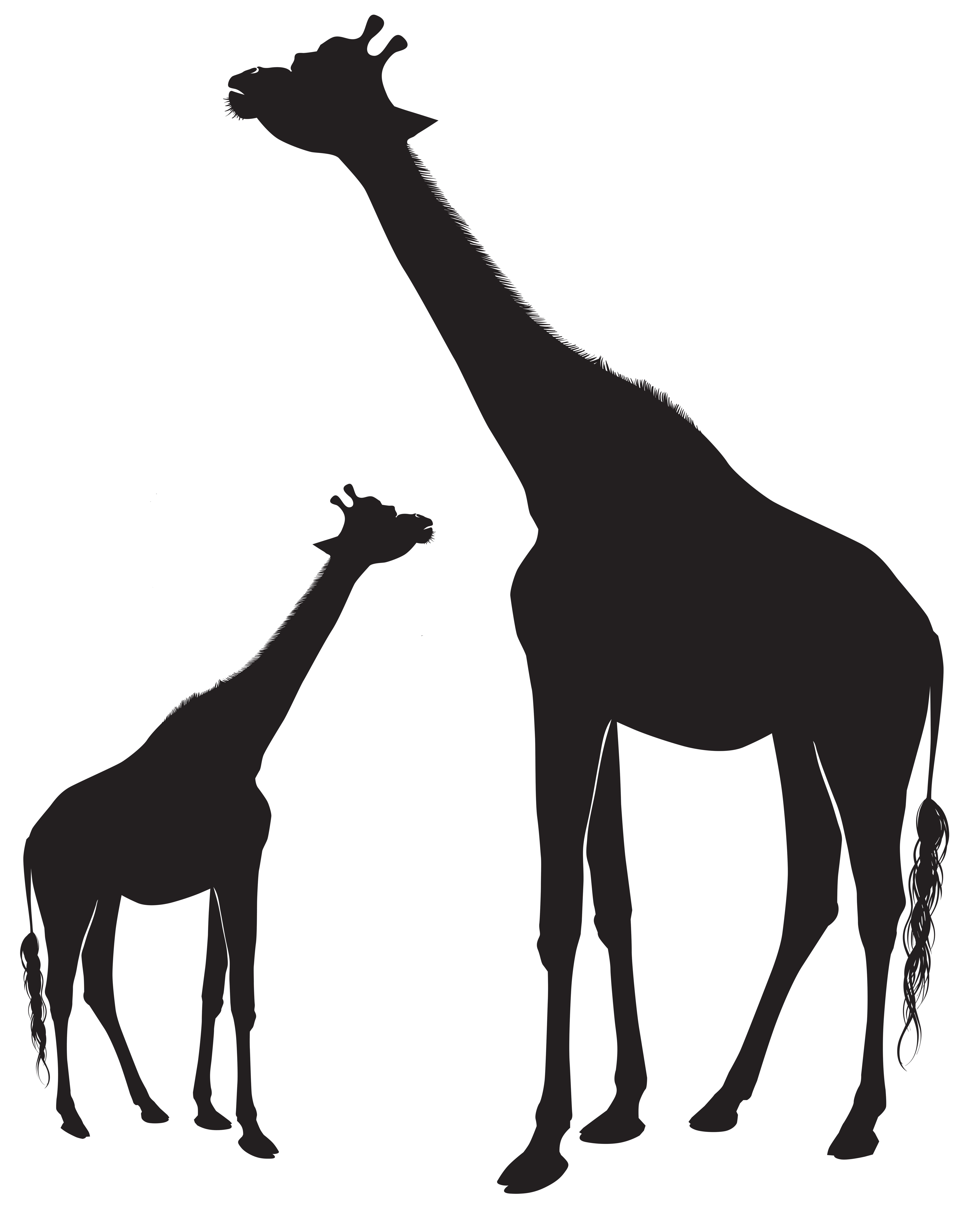 Giraffes Silhouette PNG Clip Art Image.