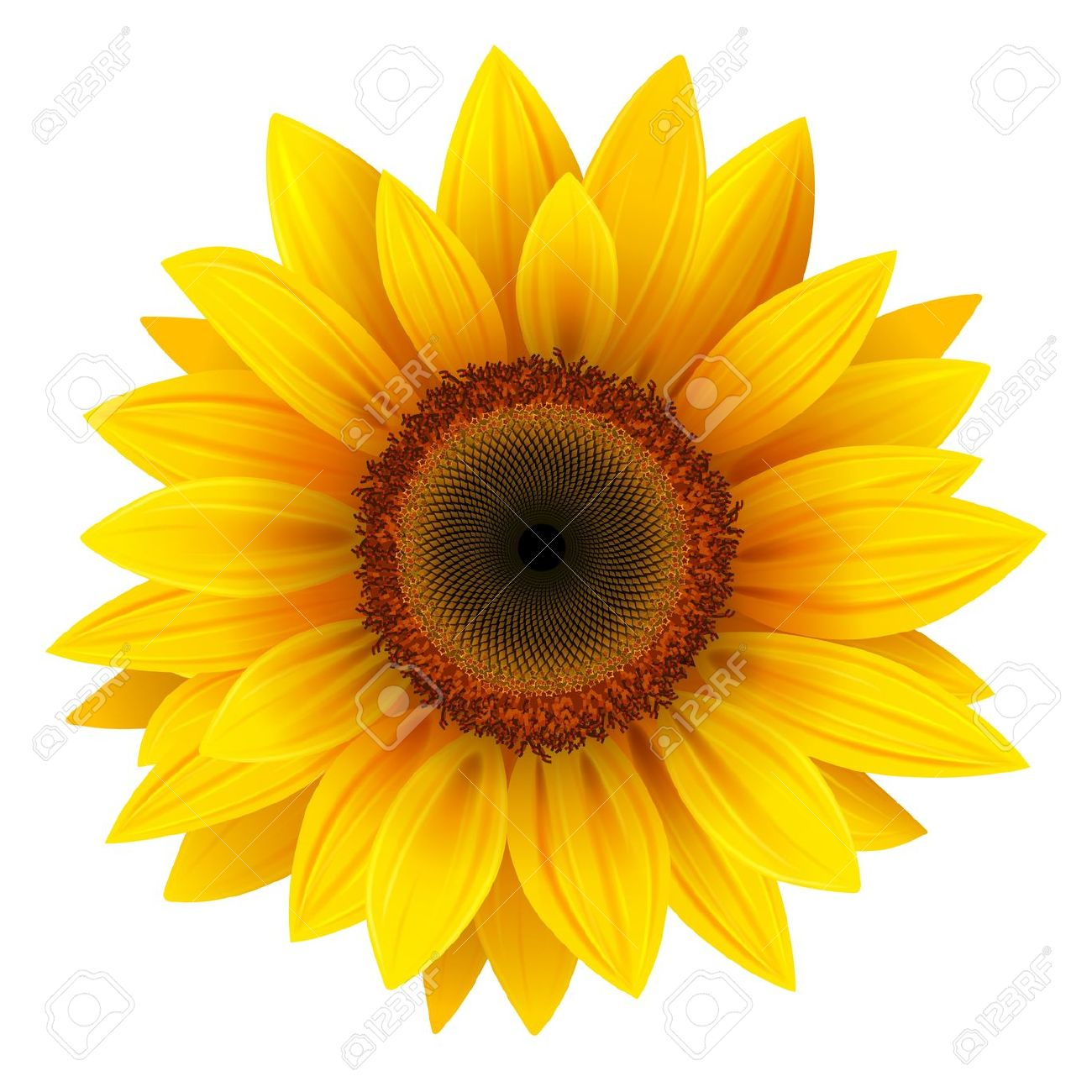 Girasole clipart 20 free Cliparts | Download images on ...