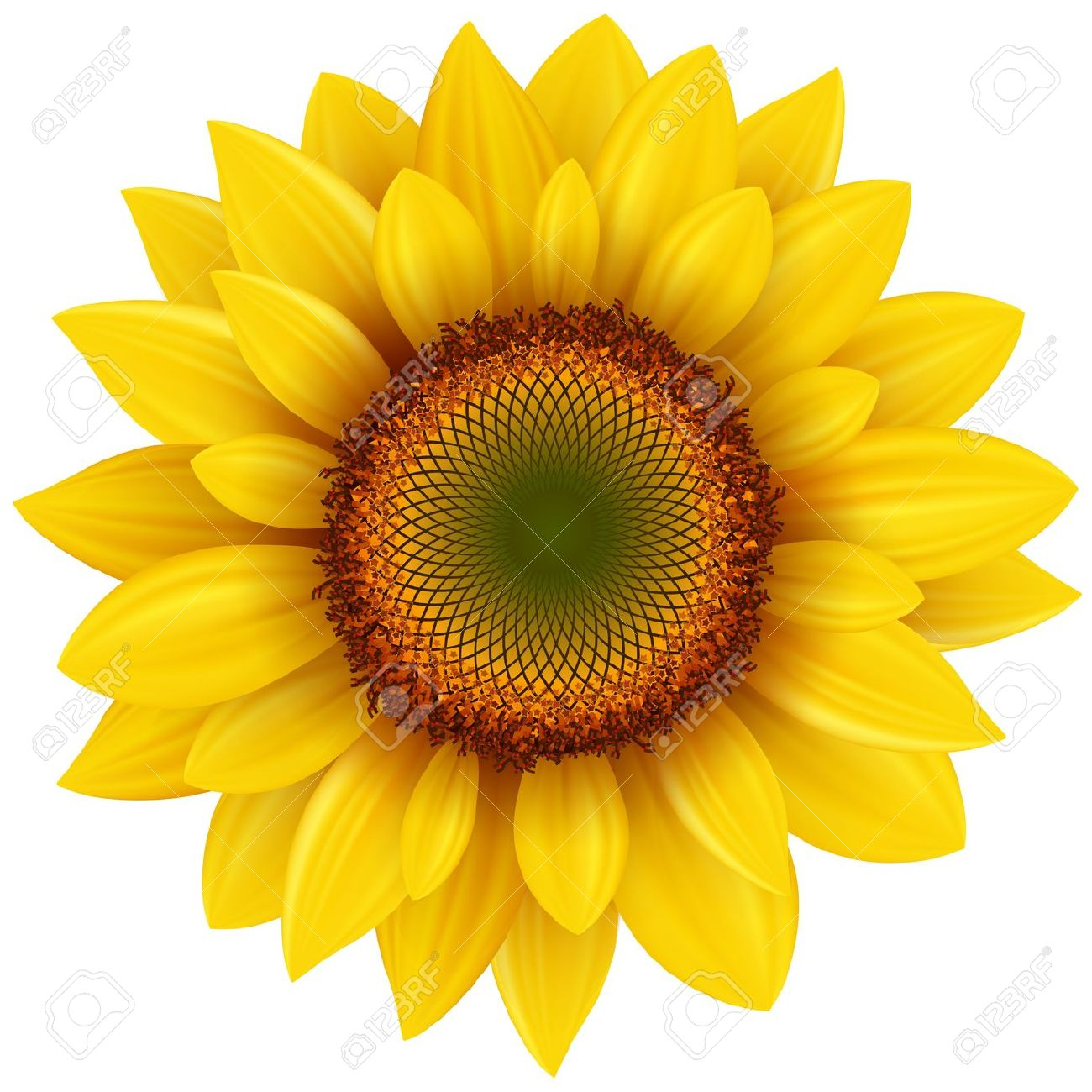 Girasoles clipart 20 free Cliparts | Download images on ...