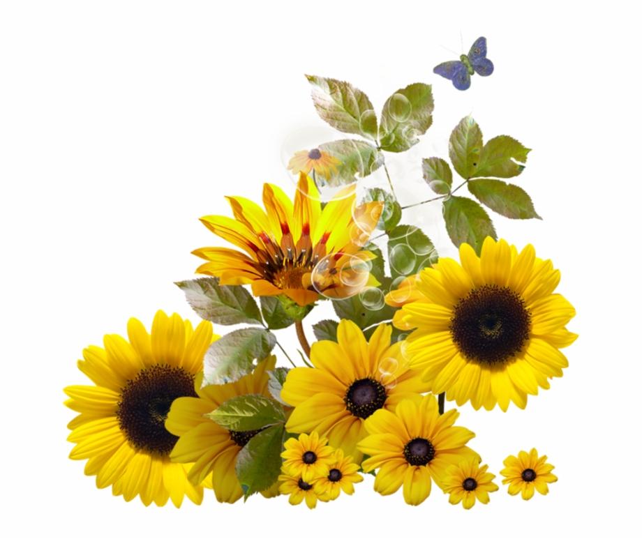 Sunflower Corner Border Clipart Download.