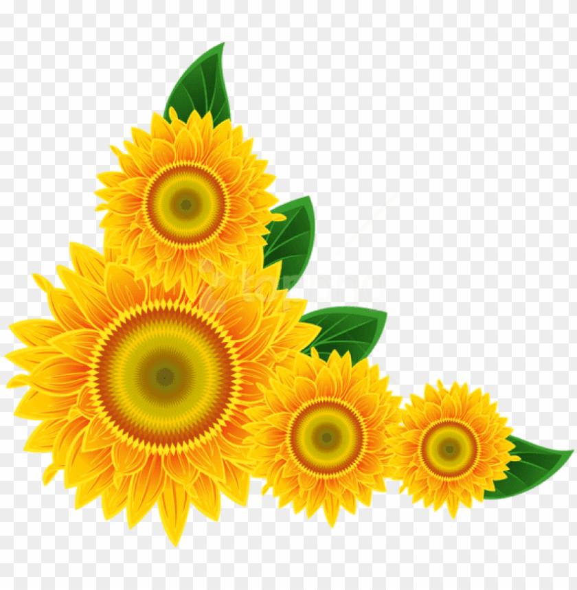 free png download sunflower corner decoration clipart.