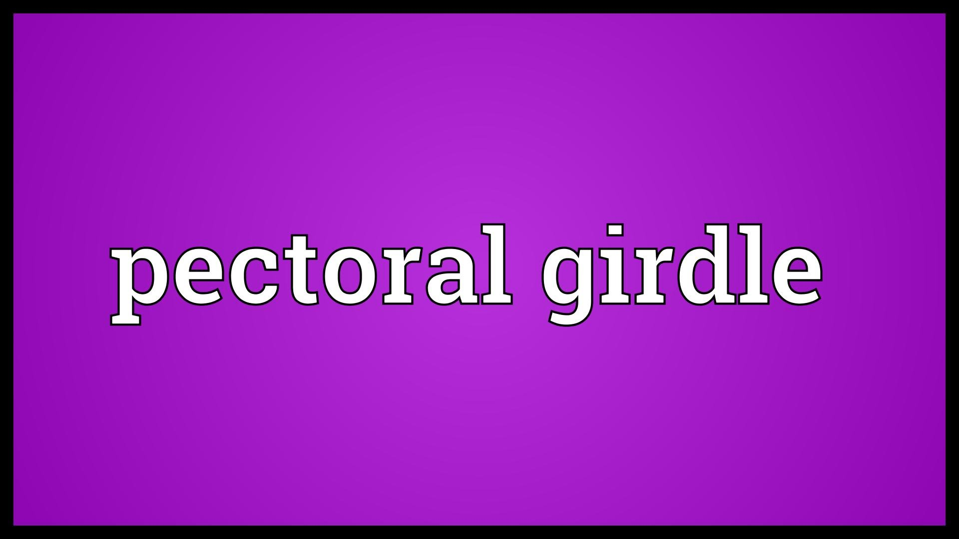 Pectoral girdle Meaning.