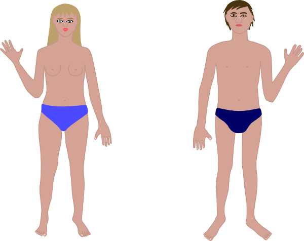 Download Free png Human Body Boy & Girl Clip Art at PNGio vector.