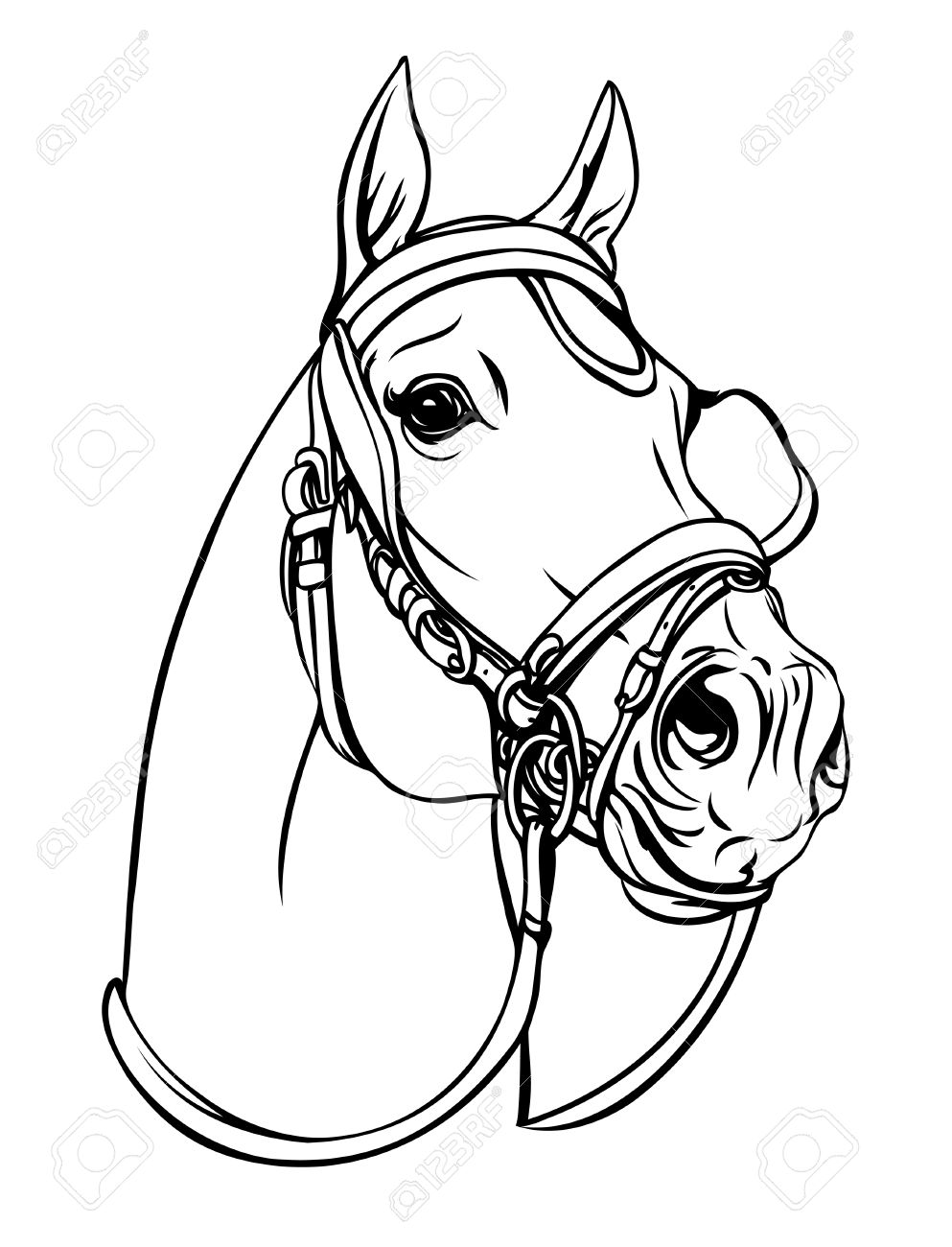 2,598 Bridle Stock Illustrations, Cliparts And Royalty Free Bridle.