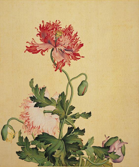 Peony flower by Giuseppe Castiglione.