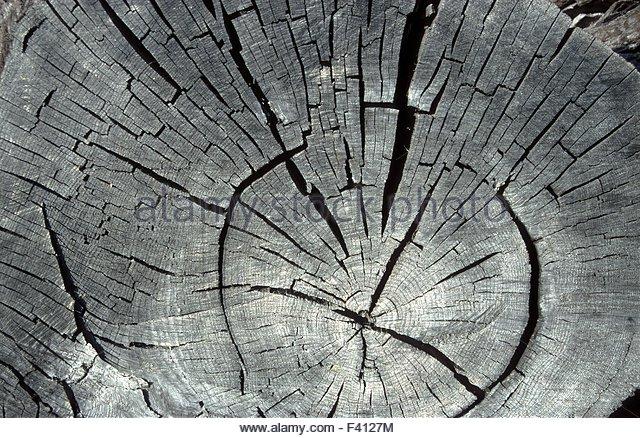 Tree Slice Stock Photos & Tree Slice Stock Images.