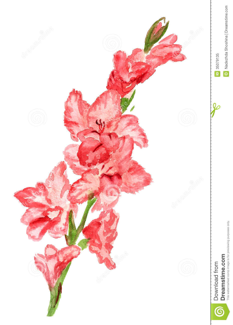Gladiolus clipart free.
