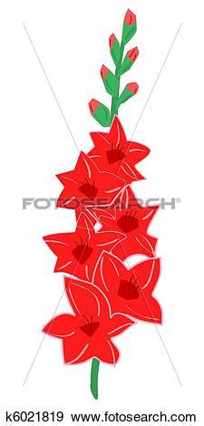 Stock Illustration of Gladiolus k6021819.