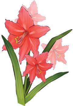 Gladiolus Flower Clip Art.