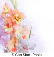 Gladiolus Illustrations and Clipart. 236 Gladiolus royalty free.