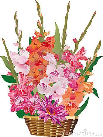 Gladiolus Stock Illustrations.
