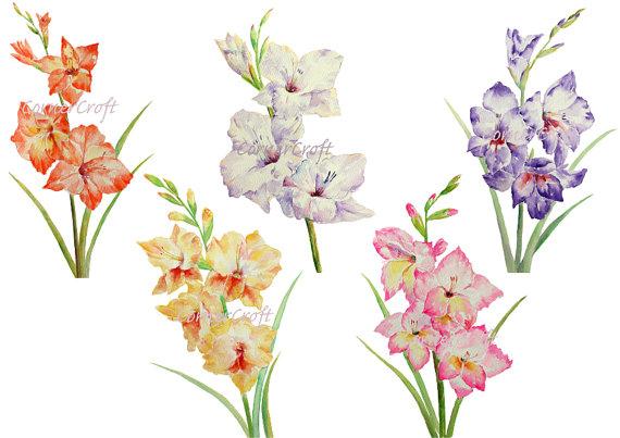 Gladiolus Clipart.