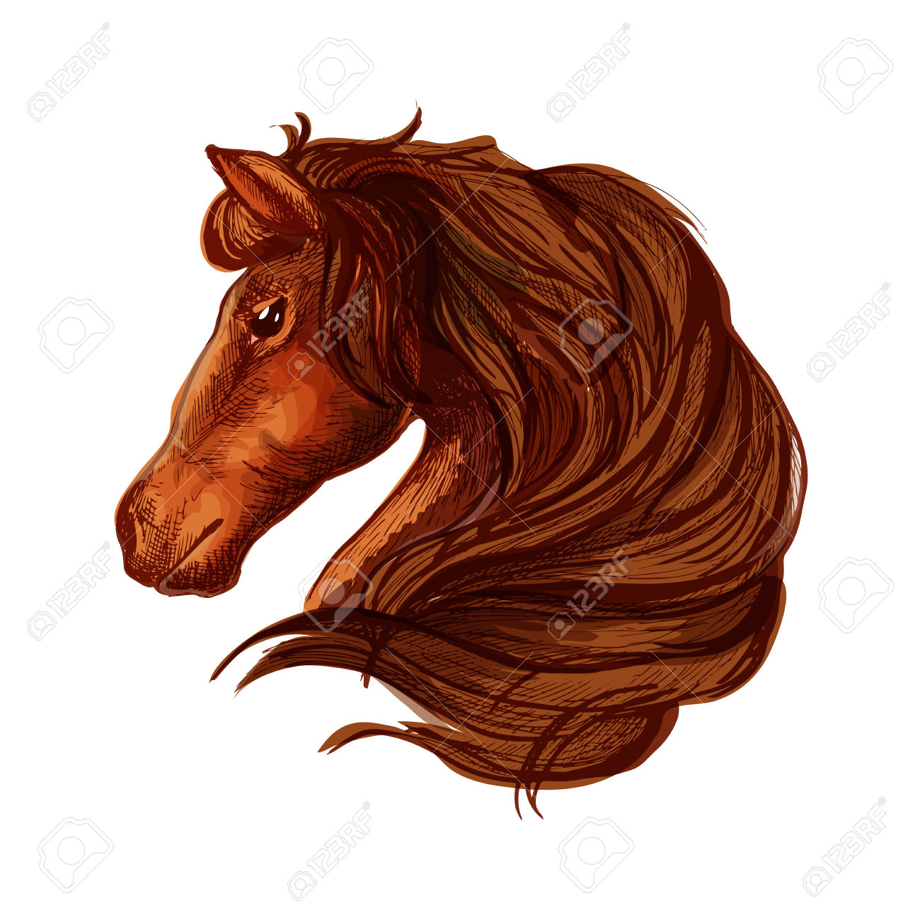 Horse With Long Wavy And Long Mane. Portrait Of Brown Bay Stallion.