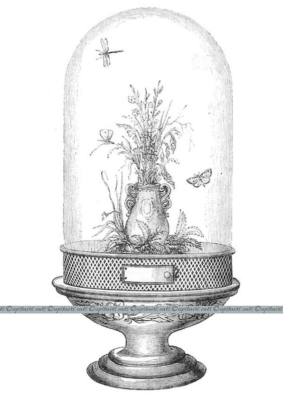 Butterflies, Glass domes and Vintage on Pinterest.