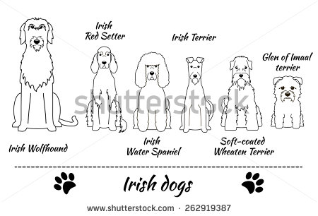 Irish glen imaal terrier clipart.