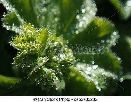 Stock Photo of Glistening Rain Drops.