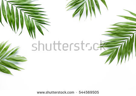 Green Leaves Background Stock Images, Royalty.