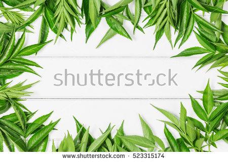 Tiny Leaf Stock Photos, Royalty.