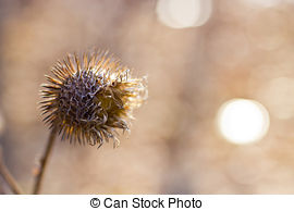 Globe thistle Illustrations and Stock Art. 20 Globe thistle.