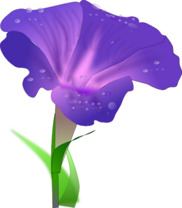 Morning Glory Clip Art at Clker.com.